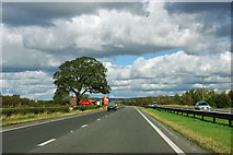 SE4177 : Tree by the A168 by Robin Webster
