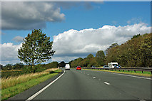 SE4287 : Small  tree by the A19 by Robin Webster