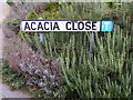TM2042 : Acacia Close sign by Adrian Cable