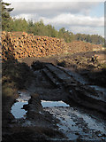 SE8094 : Log pile by the road by Colin Grice