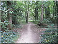 TQ5781 : Woodland path in Ash Plantation by Roger Jones