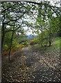 SO8984 : Footpath & cycleway to Bradley Road, Wollaston, Stourbridge by P L Chadwick