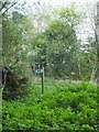 SS9510 : Footpath and nettles by David Smith