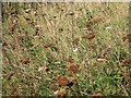 TR0751 : Wildflowers along Pope Street by Oast House Archive