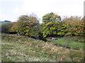 SS8132 : Picnic, near Upper Willingford Bridge by Roger Cornfoot