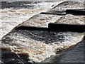 NY9464 : Salmon fails to jump weir below Hexham Bridge by Andrew Curtis