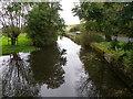 SU0425 : River Ebble, Broad Chalke - 5 by Maigheach-gheal