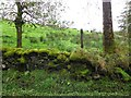 H6795 : Moss covered stone wall, Goles by Kenneth  Allen