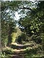 TQ3054 : Pilgrim's Lane by Derek Harper