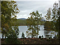 NH8807 : View through birch trees to Loch an Eilein by Phil Champion