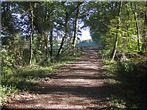 SE5976 : Track near the lower fish pond by Pauline E