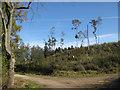 SE5976 : Cleared woodland by Pauline E