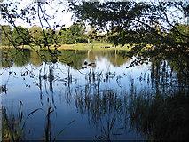 SE5976 : Lower Fish Pond by Pauline E