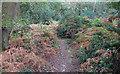 TM3650 : Footpath into Staverton Thicks by Roger Jones