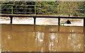 J2766 : Canal overspill. Lambeg by Albert Bridge