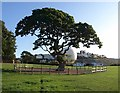 SX9063 : Oak, Torre Abbey Meadows by Derek Harper