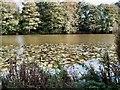 TQ6410 : Water Lilies - Herstmonceux Castle moat by Paul Gillett