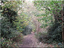 TQ3765 : Bridle Road to Kennel Wood by David Anstiss