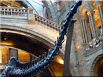 TQ2679 : Tail of a Dinosaur, Natural History Museum, London SW1 by Christine Matthews