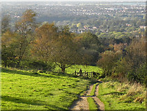 SJ9693 : Werneth Low Country Park by David Dixon
