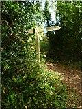 SX8463 : Orange Way in Devon and Torbay (68) by Shazz