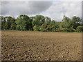 TL2764 : Gamebird feeders near Papworth St Agnes by Hugh Venables