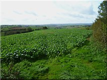 SX8465 : Orange Way in Devon and Torbay (78) by Shazz