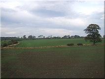 NZ4004 : Farmland near Rose Hill Farm by JThomas