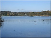 SE7170 : The Great Lake, Castle Howard by Pauline E
