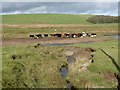 NS8421 : Cattle and feeder on the banks of the Duneaton Water by Oliver Dixon