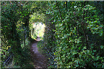 SU4726 : Path toward the River Itchen by David Lally