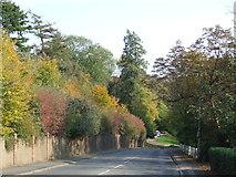 TQ3355 : Autumn at Caterham by Malc McDonald