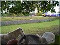 SJ9180 : Sociable ponies near Adlington by Antony Dixon