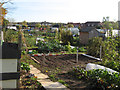 SE5500 : Broomhouse Lane Allotments 1 by Jonathan Wilkins
