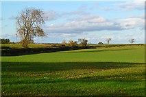NZ2507 : Farmland, Croft-on-Tees by Andrew Smith