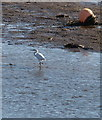 SX8772 : Egret, Hackney Channel by Derek Harper