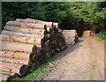 SX7889 : Logs, Cod Wood by Derek Harper