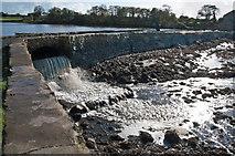 SN0403 : Mill Pond Dam - Carew by Mick Lobb