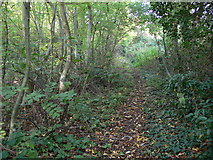 SK5802 : Path through the St Mary's Allotments by Mat Fascione