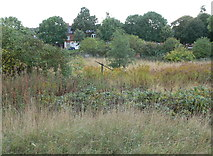 SK5802 : The derelict and overgrown St Mary's Allotments by Mat Fascione