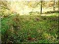 NS6179 : Campsie glen, old bleach pond by Robert Murray