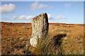 NU0131 : A standing stone on Doddington Moor by Walter Baxter