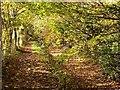 SU0394 : West along the Thames Path west of Ashton Keynes by Brian Robert Marshall