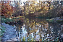 NT4835 : Pond in Gala Policies by Jim Barton