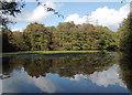 SO8992 : Spring Pool in Baggeridge Country Park near Sedgley by Roger  Kidd