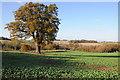 SO6866 : Arable land near Broomy Fields Farm by Philip Halling
