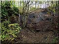 SO8992 : Jake's Ladder in Baggeridge Park near Sedgley by Roger  Kidd