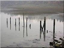 TQ8068 : Posts in Rainham Creek by David Anstiss
