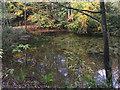 SO8992 : The Upper Wishing Pool in Baggeridge Country Park near Sedgley by Roger  Kidd