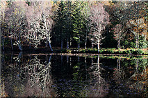 NT4227 : Reflected trees on the Upper Loch at Bowhill Estate by Walter Baxter